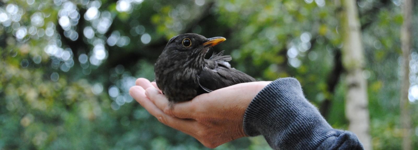 As aves e a saúde do Jardim